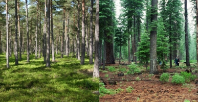 small_forest_pr-a9a58d12f14b25e18e692460789eb891.jpg
